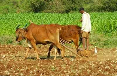 сравнение ГМО и обычного земледелия
