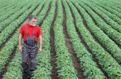 фермер прогуливается среди соевого поля