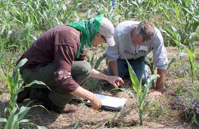 органическая кукуруза в США