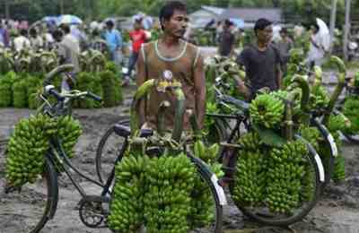 тестирование гм бананов