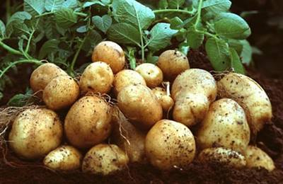 аппеляционный суд на ГМО картофелем