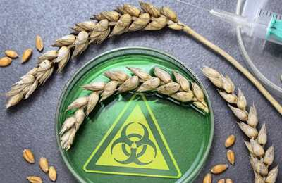 Еврокомиссия хочет скрыть ГМО