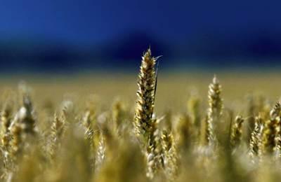 Германия открещивается от ГМО