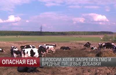 о запрете в России ГМО и добавок