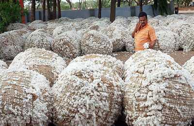 падение урожая хлопка в Индии