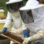 муравьи на замену пчелам