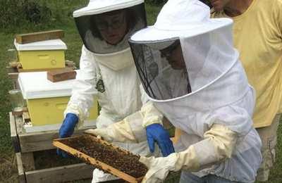 пчелы и Монсанто