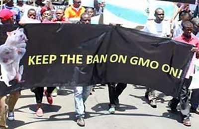 протесты против ГМО в Кении