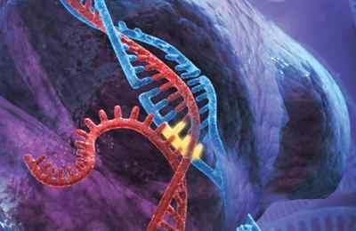 путаница генной инженерии