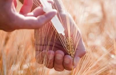 Польша отказывется от ГМО
