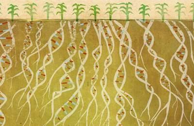проростание ГМО семян