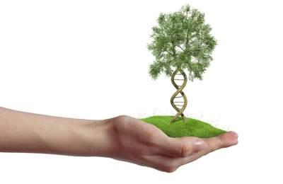 ученые встревожены ГМО