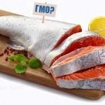 риски создания ГМО лосося