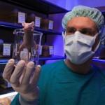 пробелы в генетической модификации