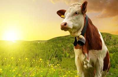 органическое молоко