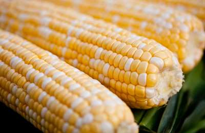неконтролируемая кукуруза в США