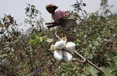 роялти за ГМО хлопок