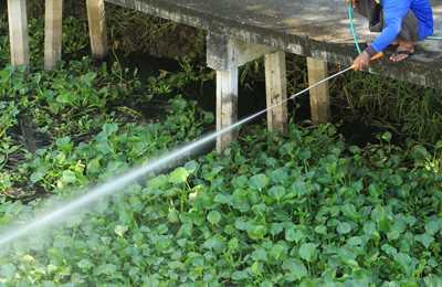 мужчина распыляет гербицид