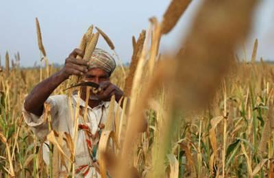 запрет продажи ГМ-кукурузы в Пакистане