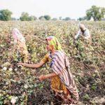 потери индийских фермеров