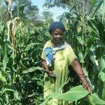 Намибия опасается ГМО