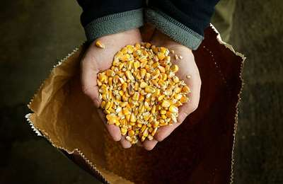 доклад об урожайности ГМО
