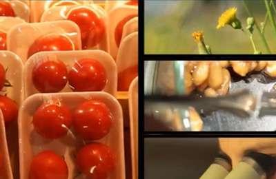 территория безопасности ГМО