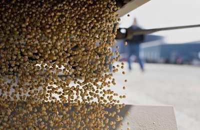 в ЕС уменьшились посевы ГМО