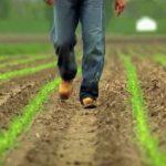 ЕС одобрил три сорта ГМО сои