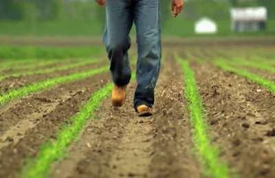 Европа одобрила новые ГМО