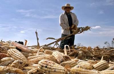 неудачи ГМО в Испании