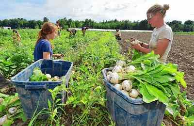 разногласия в оценке ГМО