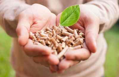 топливо из растений