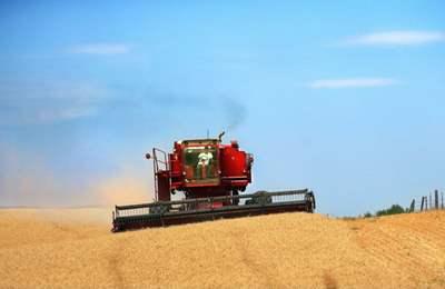 ГМО пшеница в Вашингтоне
