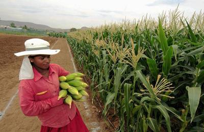 Индия удивлена ГМО