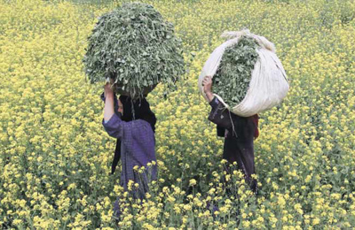 Пакистан недоволен ГМО