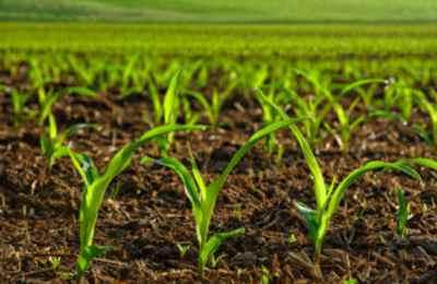 сговор с ГМО промышленностью в Англии