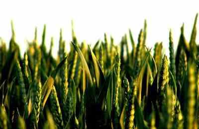 Япония и Южная корея блокируют ГМО