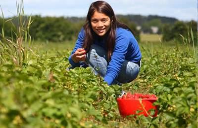 Дания и органическое производство