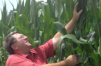 фермер возле кукурузы
