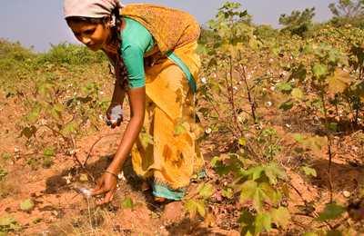 неурожай хлопка в Индии