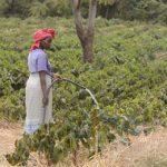фермер в Танзании