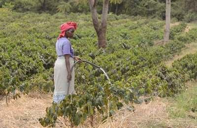 танзанийский фермер