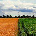 отношение Евросоюза к ГМО