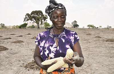кукуруза в Зимбабве