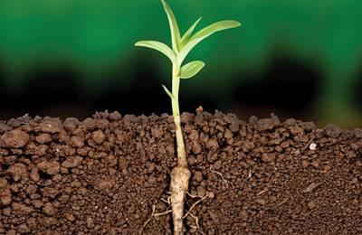 органическое растение