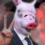 гибрид свиньи и человека