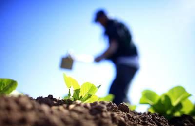 органическое возделывание земли