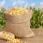 поставки не-ГМО продуктов