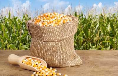 Каргилл и ГМО